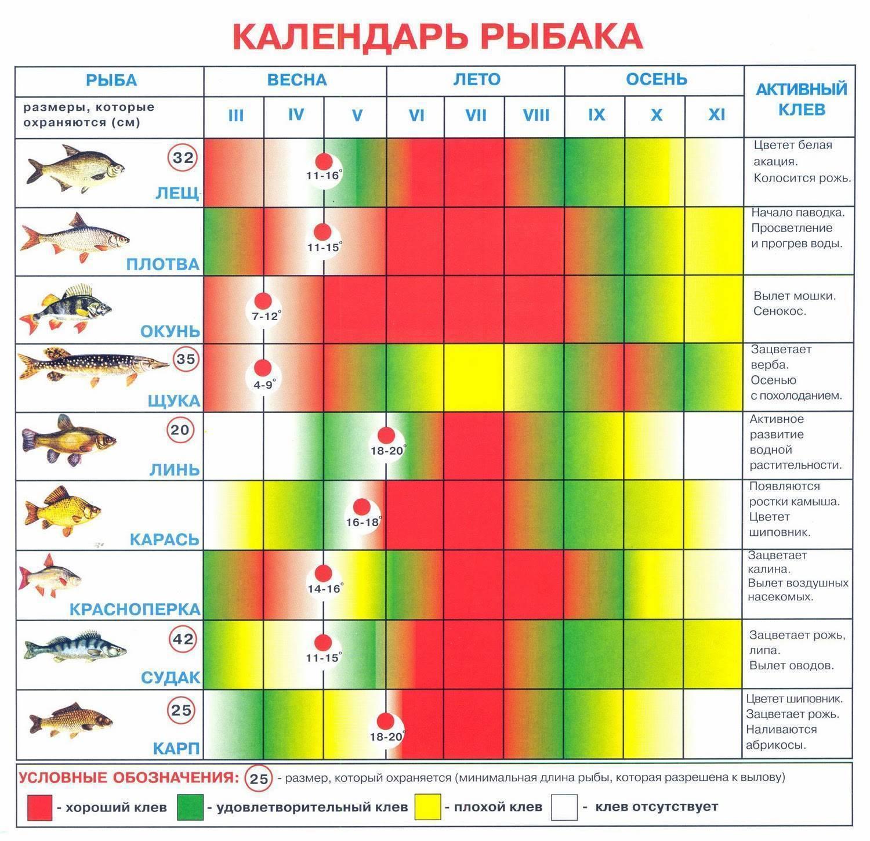 Клюет ли рыба в дождь