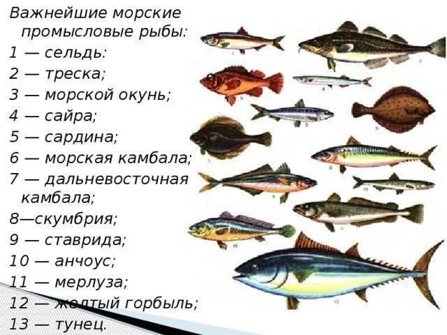 Рыбы с белым мясом