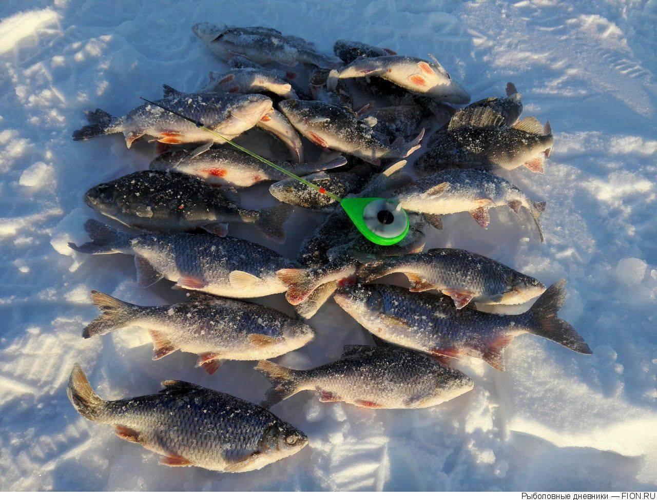 Нижегородское горьковское море: базы, цены, как добраться