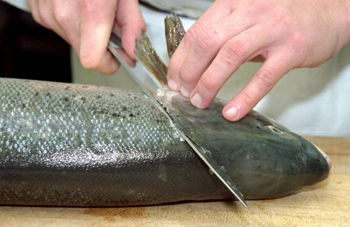 Как почистить горбушу - подготовка рыбы, хитрости при разделке, полезные свойства горбуши