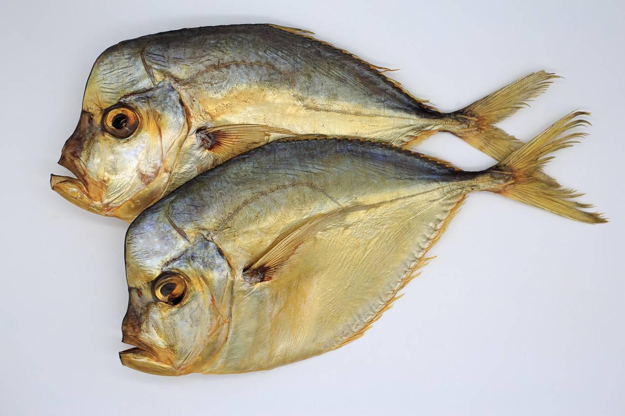 Особенности рыбы-клоуна, или где обитает и как живёт «немо»