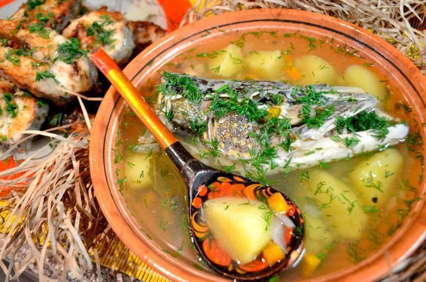 Уха из щуки - рецепты с фото пошагово