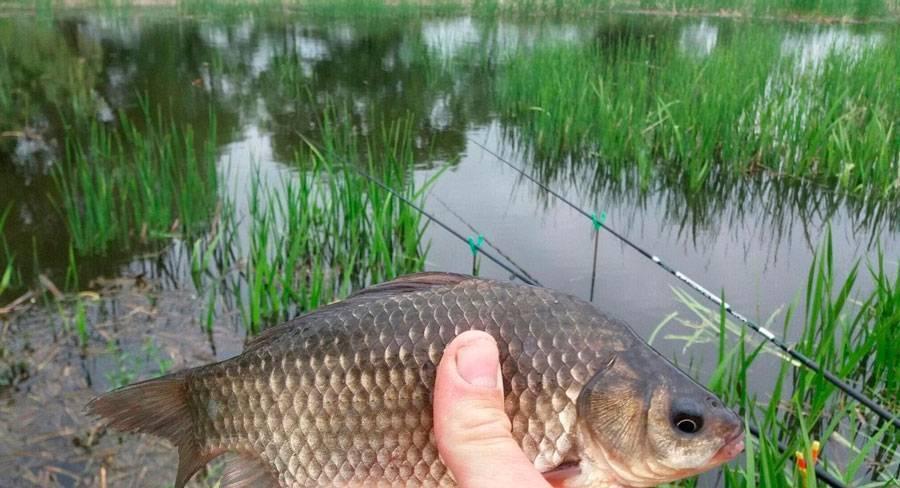Рыбалка на карпа в июле