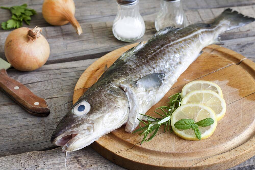 Рыба простипома - где водится, где купить, полезные свойства, как приготовить простипому