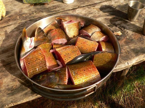 Как приготовить хариуса: рецепты приготовления рыбы, польза хариуса и колорийность.