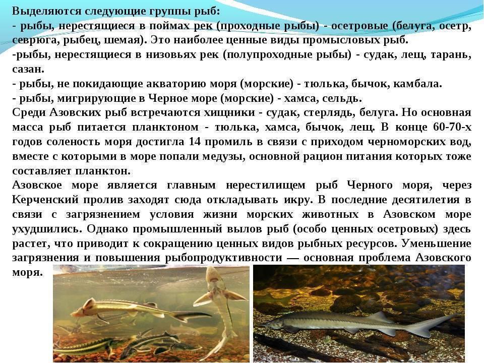 Как ловить леща на фидер на реке?
