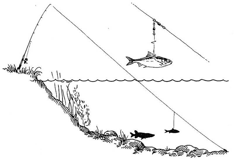 Ловля жереха на спиннинг весной: применяемые снасти и ужение на живца - vobler club - клуб любителей рыбалки
