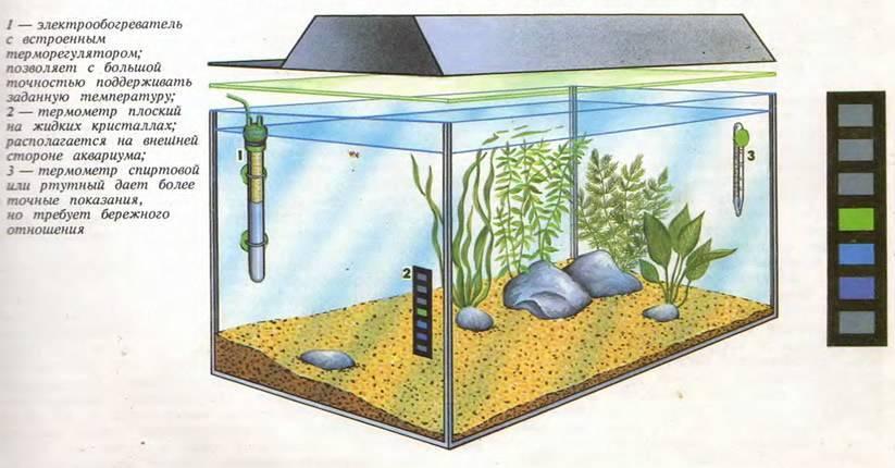 Температура воды для гуппи в аквариуме (11 фото): какой она должна быть для содержания рыбок?