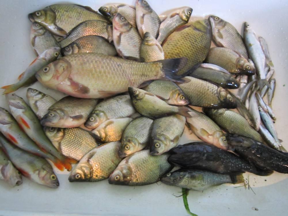 Рыбалка озеро ильмень волгоградская область