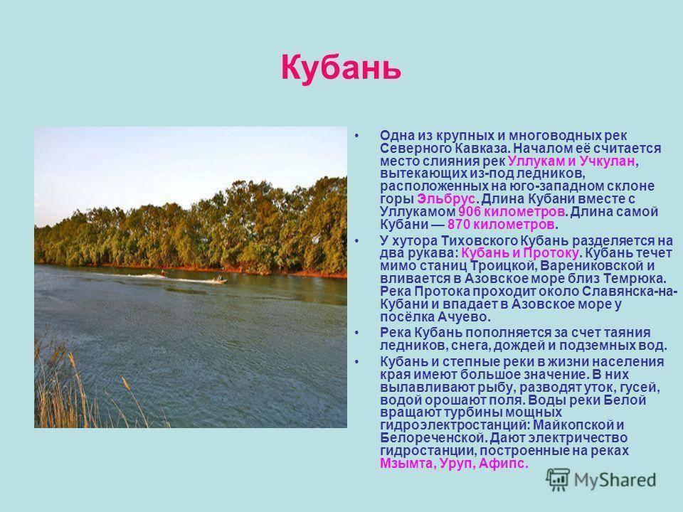 Доклад на тему животные краснодарского края сообщение