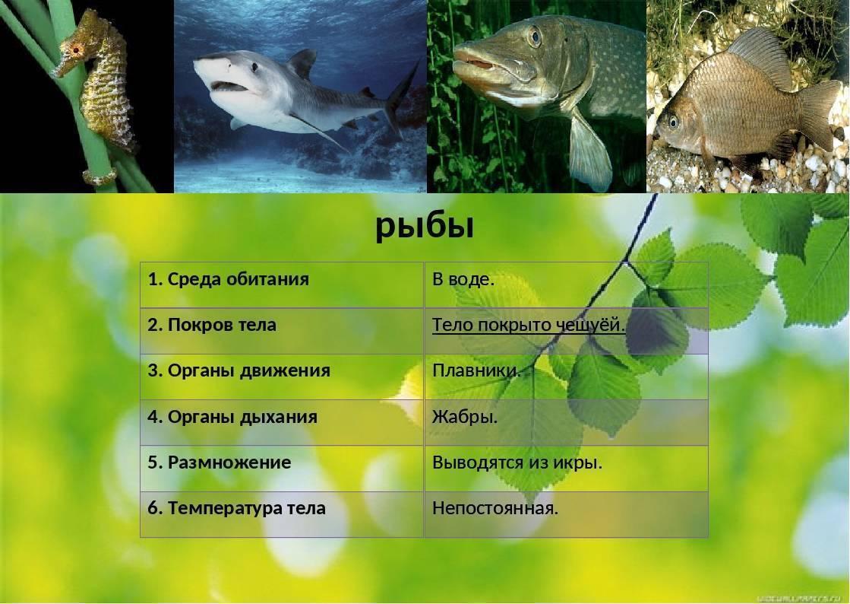 Рыба щука: ловля и рецепты блюд, которые из нее можно приготовить (135 фото)