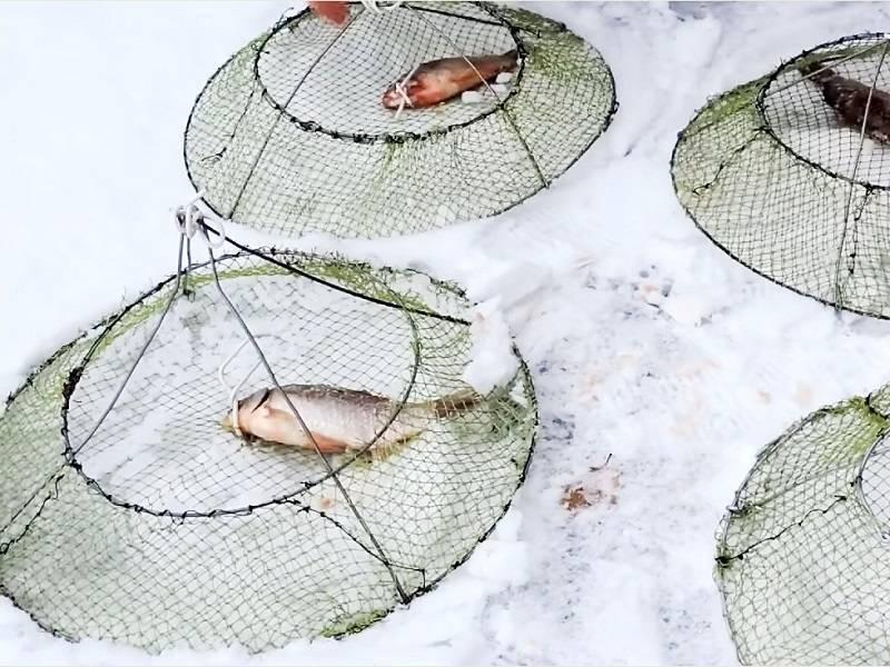 Как ловить раков? секреты опытных рыболовов