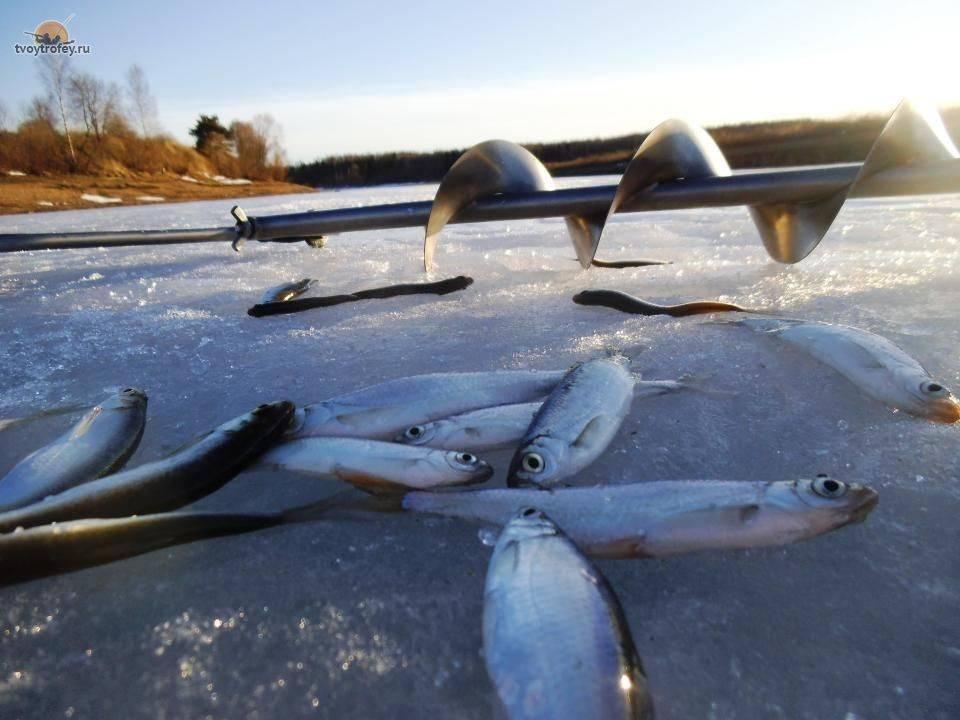 Зимняя рыбалка на щуку: секреты ловли зимой, популярные снасти, подходящие наживки и приманки