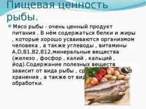 Толстолобик: польза и вред. костлявая или нет эта рыба, как ее приготовить?