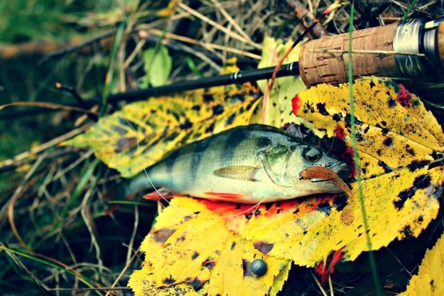 Щука в октябре: где искать, как и на что ловить. ловим щуку в начале, середине и конце октября на спиннинг, на живца