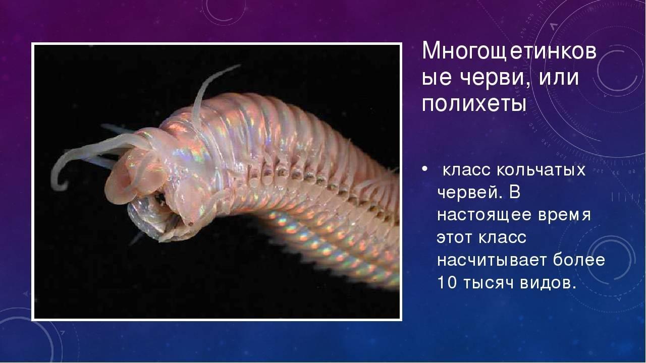 Белые черви в аквариуме: причины появления и методы борьбы