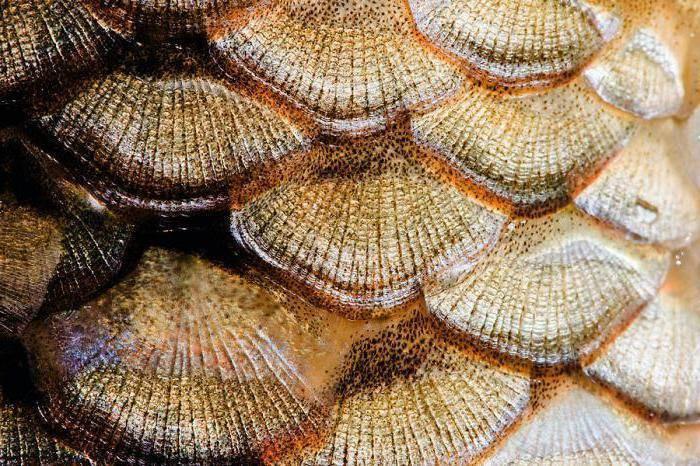 Рыбы тресковых пород