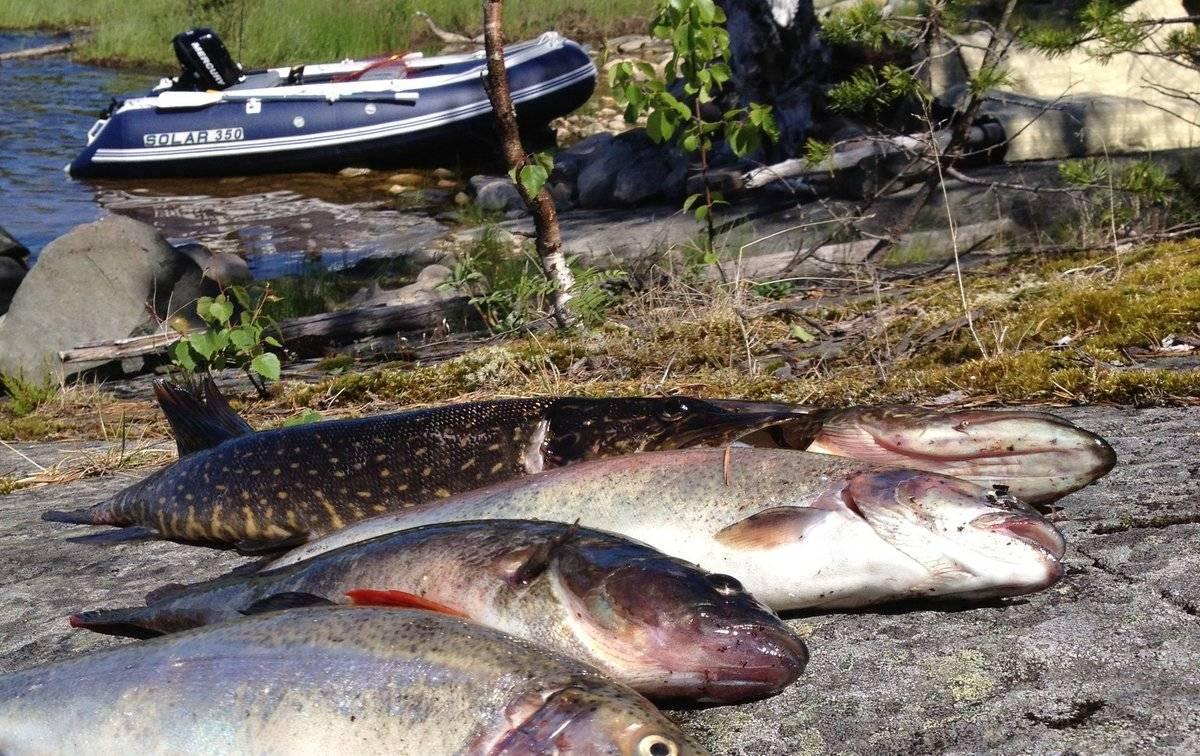 Минимально разрешенные к вылову размеры рыбы для западного рыбохозяйственного бассейна, сохрани в закладки