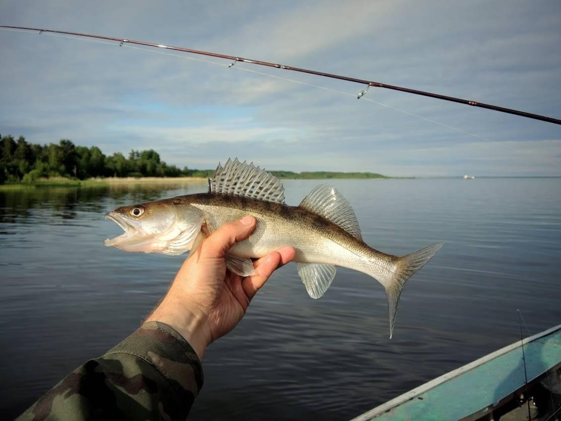 Отдых на ладоге: лучшие места для рыбалки. ладожское озеро: рыбалка, лучшие места для ловли и отдыха на ладоге
