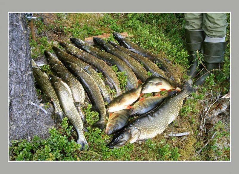 Путин на рыбалке в туве поймал 21-килограммовую щуку » тува-онлайн
