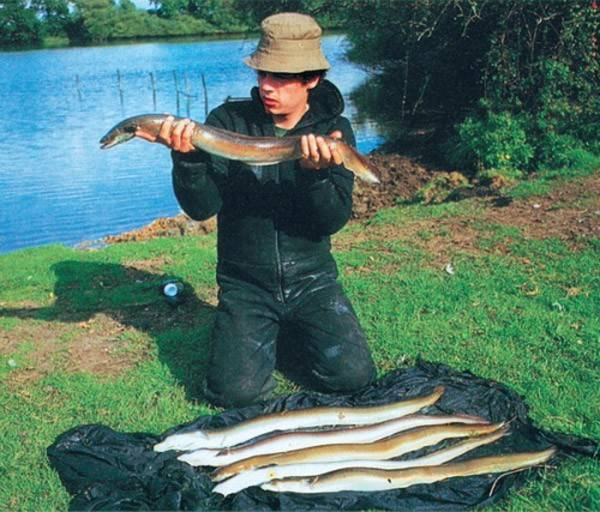 Ловля угря на реке