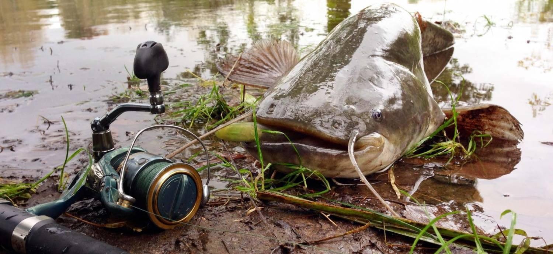 Ловля сома на реке с видео: когда ловить и на что можно поймать, рыбалка весной и в другое время года, лов с берега на донку
