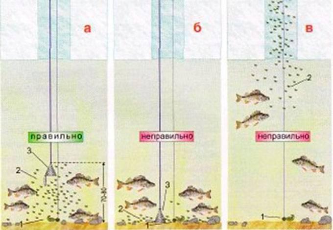 Ловля чебака зимой на мормышку, как ловить летом на поплавочную удочку