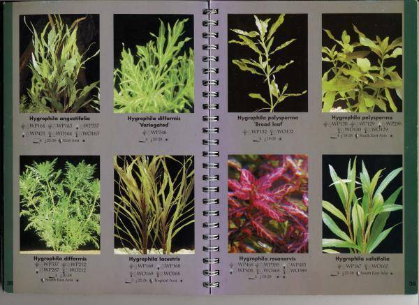 Красные аквариумные растения: названия, фото, рекомендации!