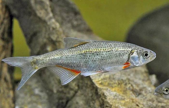 Промысловая рыба - виды с названиями и фото, использование и охрана | семейство промысловых рыб
