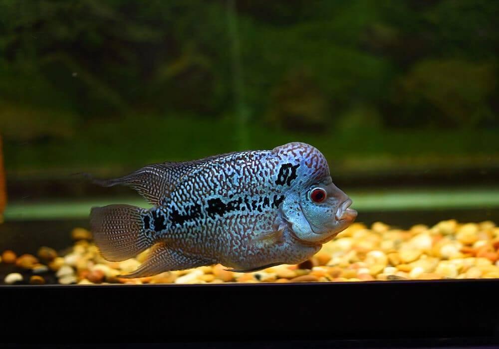 Самые странные и необычные аквариумные рыбки: описание с фото