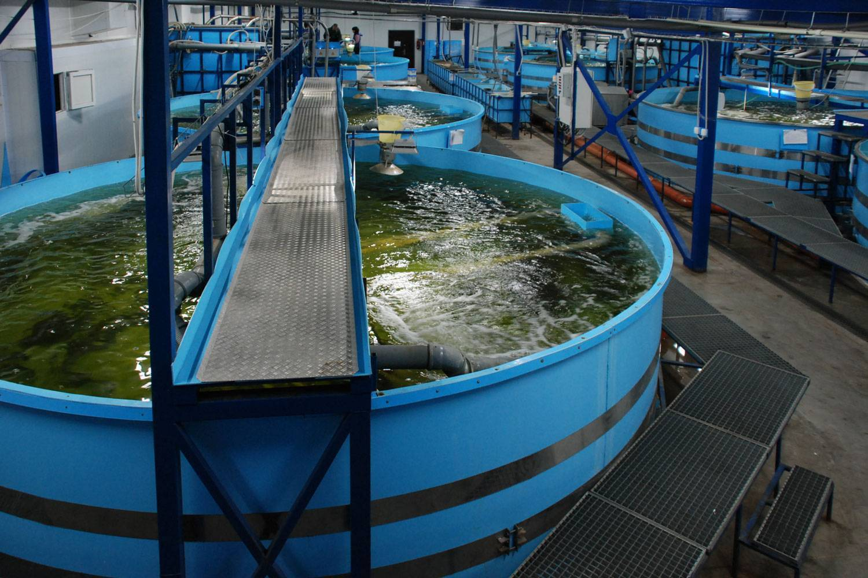 Выращивание и разведение форели в прудах