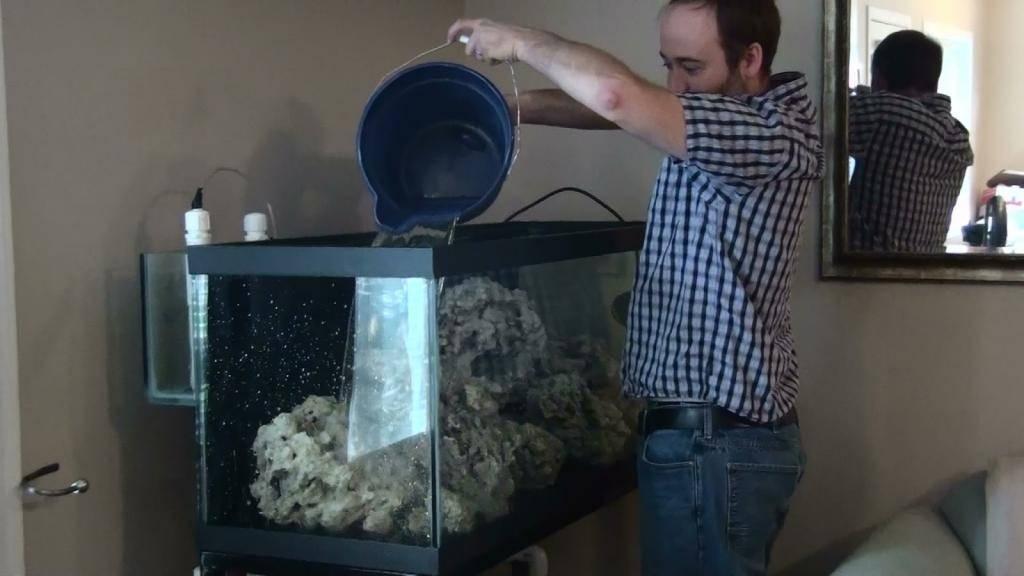 Почему от подготовки воды в аквариуме зависит жизнь рыбок и как все правильно сделать?