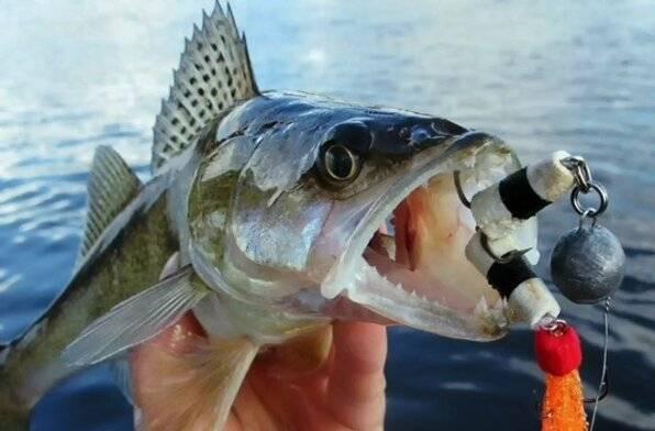 Мандула: важные детали. часть 1 - статьи о рыбалке