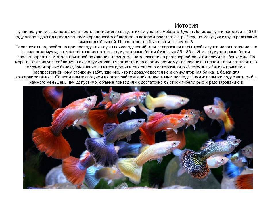 Нотобранхиус гюнтера (nothobranchius guentheri): фото, видео, содержание, разведение, купить