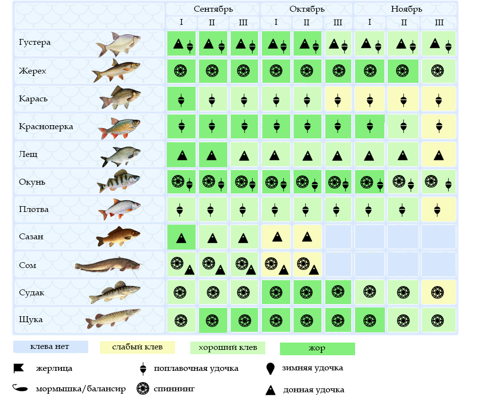 Когда клюет щука осенью: при каком давлении, в какую погоду, когда у нее начинается жор, оптимальные условия для рыбалки