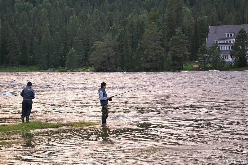 Рыбы, запрещённые для лова на алтае