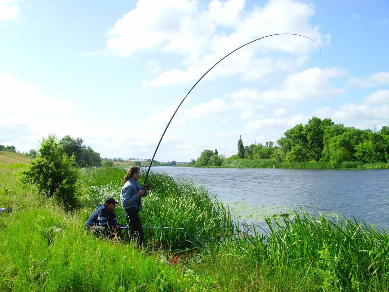 ᐉ скфо - место для рыбака - ✅ ribalka-snasti.ru