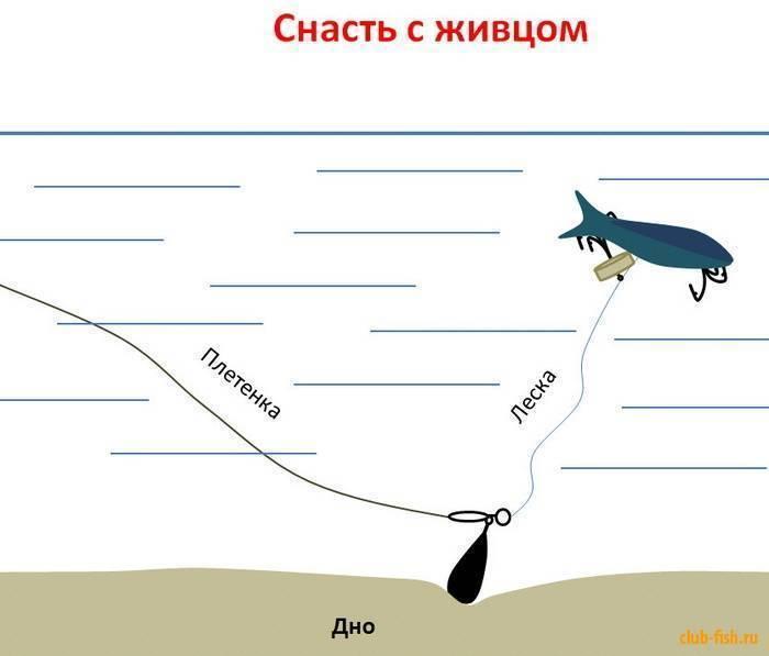 Донная снасть на судака: как правильно сделать и ловить