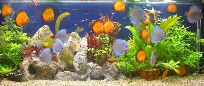 Как подготовить воду для аквариума в домашних условиях в зависимости от типа h2o, а также основные правила и средства