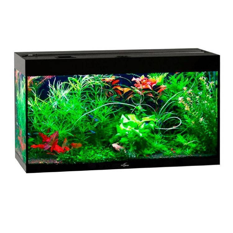 Как выбрать аквариум - полезные советы для начинающих (100 фото и видео)