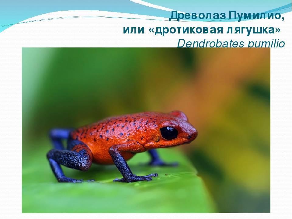 Топ-15 самых необычных видов лягушек, которых вы не видели