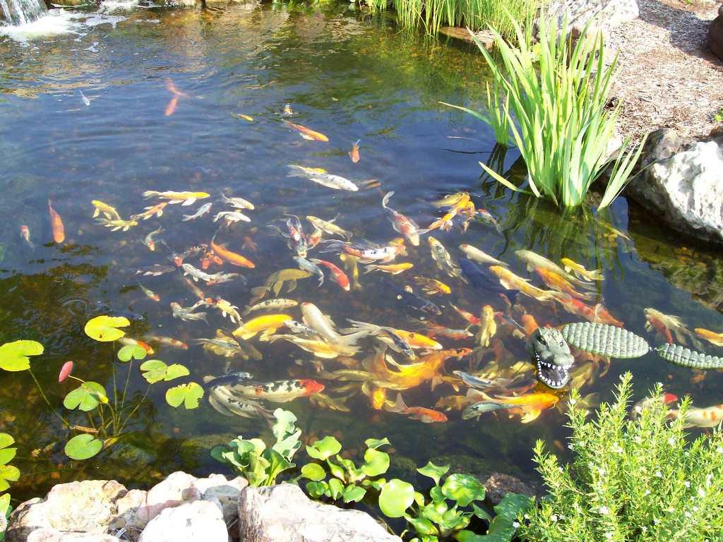 Растения и животные водоемов: описание и их значение в природе