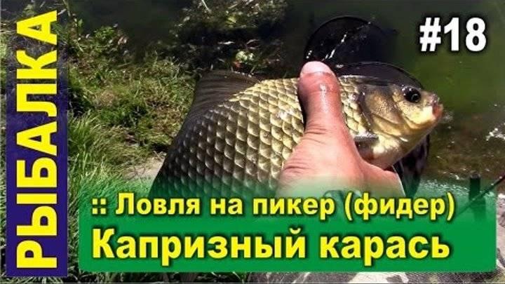 Ловля карася в мае: рыбалка на поплавочную удочку и фидер (видео)