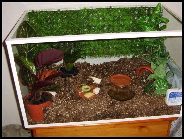 Болотное растение — сфагнум. практическое применение | выживание в дикой природе