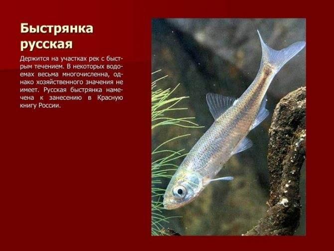 Летучая рыба. описание, особенности, образ жизни и среда обитания летучей рыбы