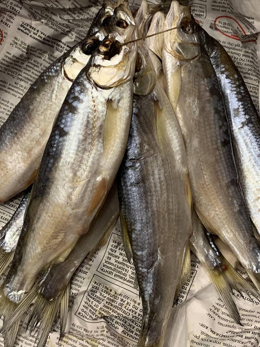 Азовско-черноморская шемая: редкая рыба