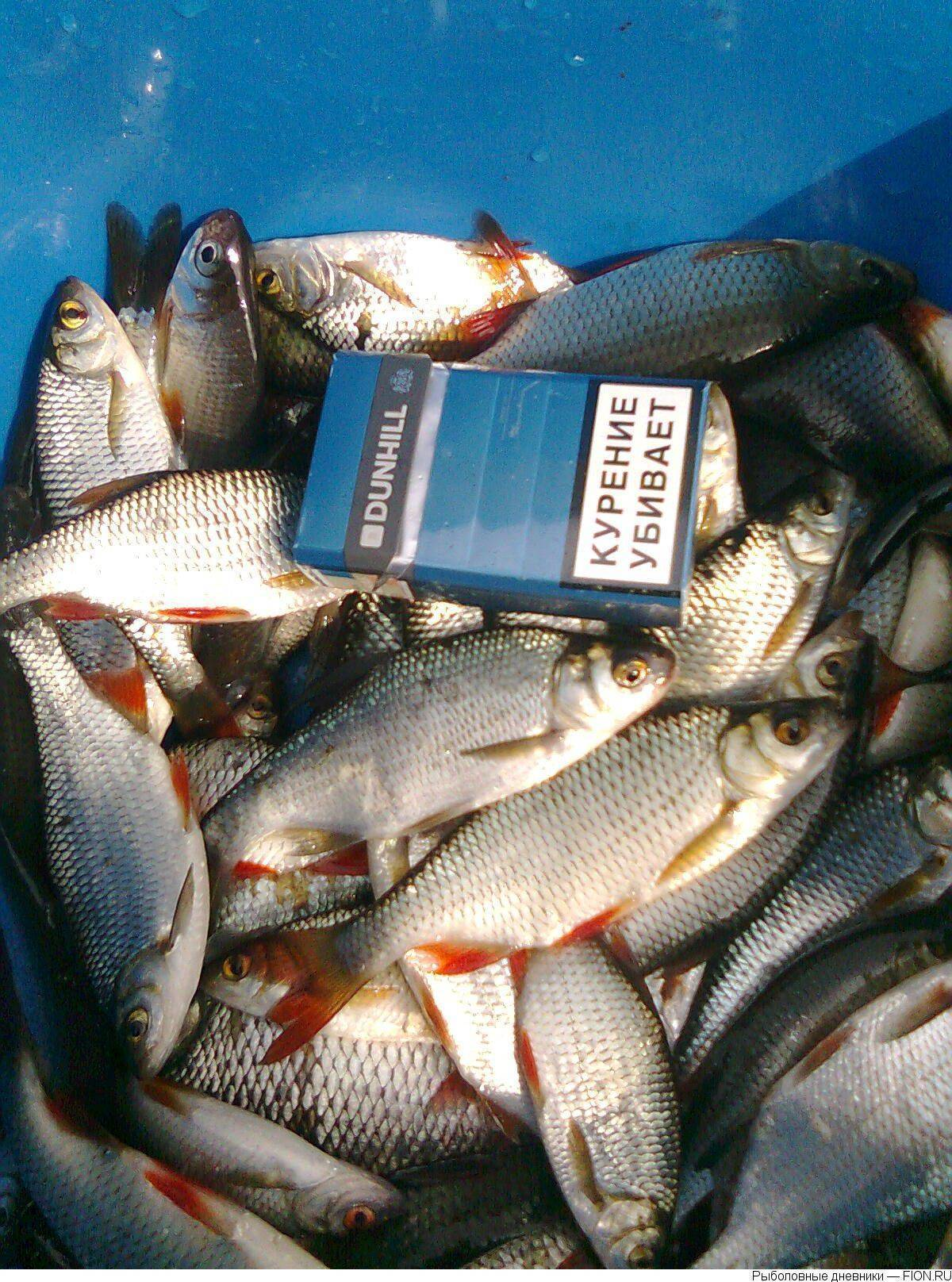 Рыбалка на реке десна московской области: лучшие места для ловли, какая рыба водится