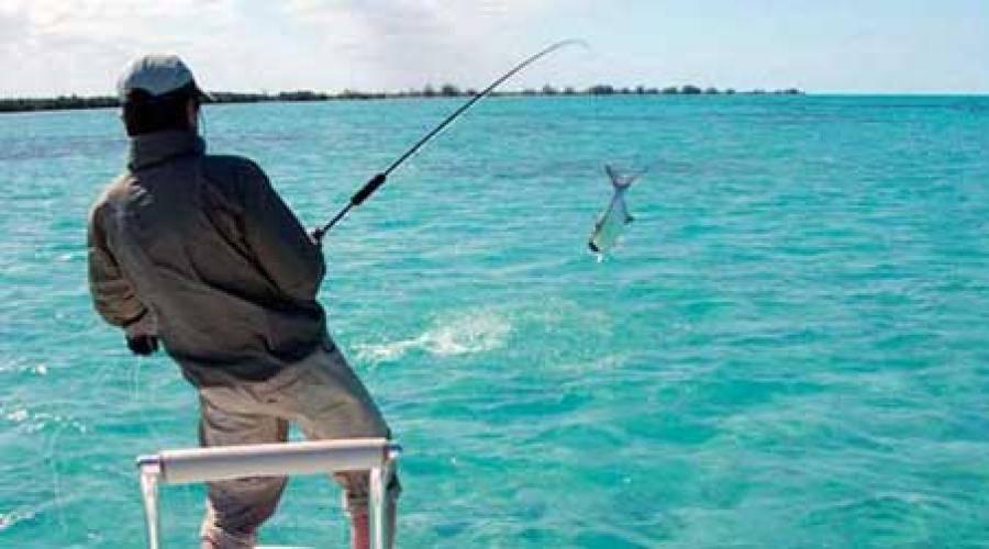 Во сне ловить рыбу руками: большую, маленькую, живую
