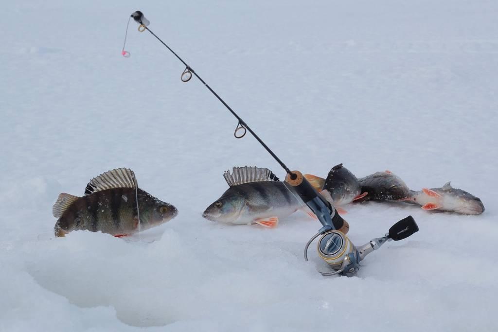 Рыбалка в карелии на базе отдыха лумиваара - особенности ловли в зимний, весенний, летний и осенний сезоны