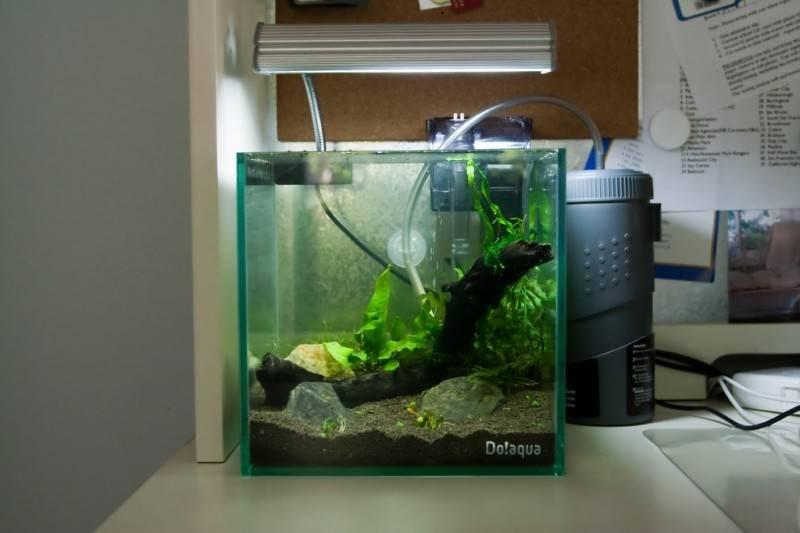 """Как расположить аквариум в интерьере кухни – газета """"право"""""""